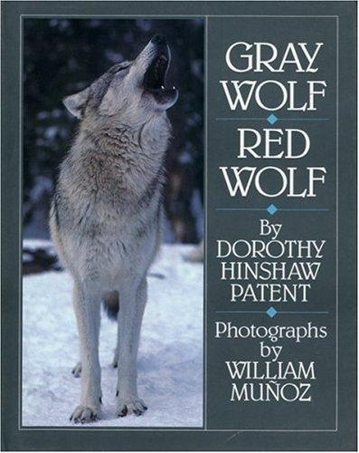 Download Gray wolf, red wolf
