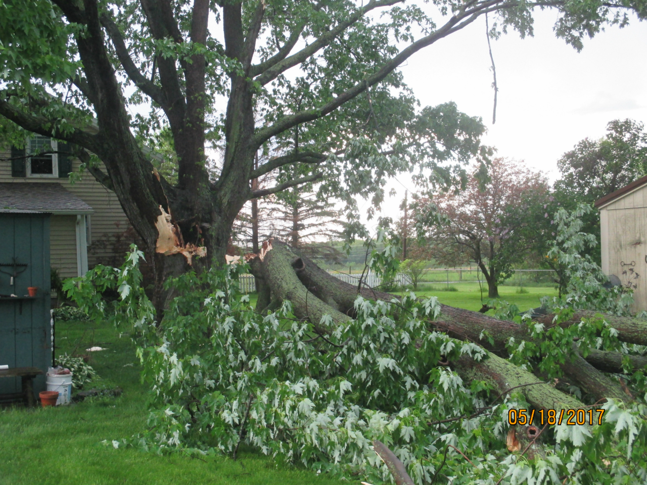 Storm brings down tree limb in Fayette (photo)