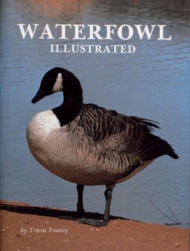 Waterfowl illustrated by Tricia Veasey