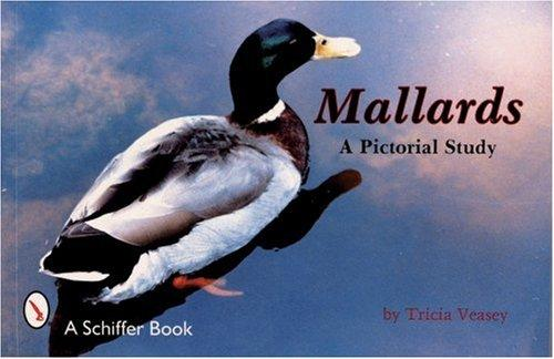 Mallards, a Pictorial Study by Tricia Veasey