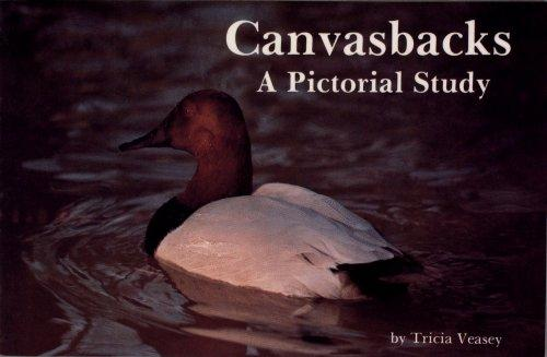 Canvasbacks by Tricia Veasey
